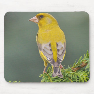 Beautiful yellow bird mouse pad