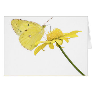 Beautiful Yellow Butterfly Card
