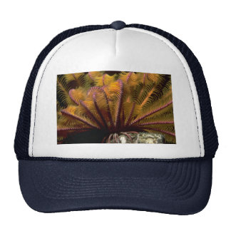 Beautiful Yellow crinoid Trucker Hat