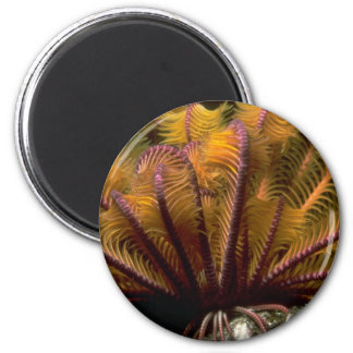 Beautiful Yellow crinoid Fridge Magnet