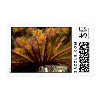 Beautiful Yellow crinoid Postage Stamps