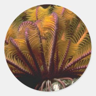 Beautiful Yellow crinoid Classic Round Sticker