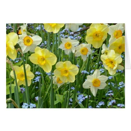 Beautiful yellow daffodil garden card