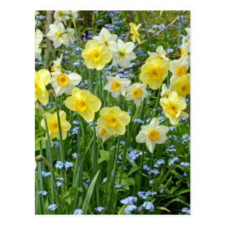 Beautiful yellow daffodil garden postcard