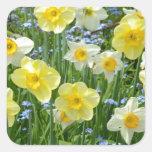 Beautiful yellow daffodil garden square sticker