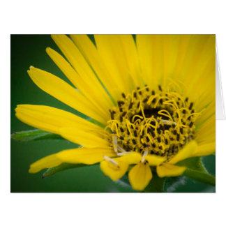 Beautiful Yellow Flower Card