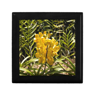 Beautiful yellow flower in National Orchid Garden Trinket Boxes