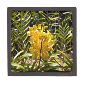 Beautiful yellow flower in National Orchid Garden Premium Trinket Boxes