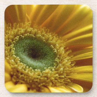 Beautiful Yellow Flower in the Morning Light Beverage Coaster