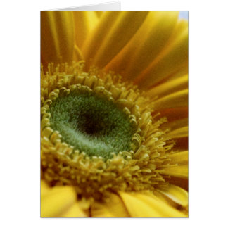 Beautiful Yellow Flower in the Morning Light Card
