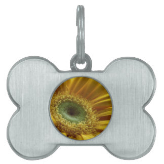 Beautiful Yellow Flower in the Morning Light Pet ID Tags