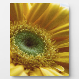Beautiful Yellow Flower in the Morning Light Plaque