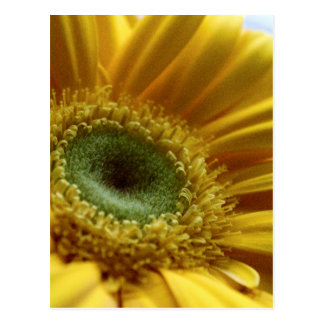 Beautiful Yellow Flower in the Morning Light Postcard