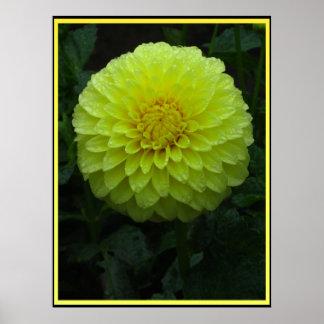 Beautiful Yellow Flower Poster