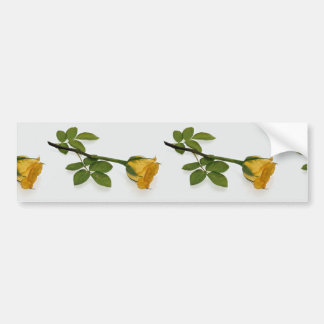 Beautiful Yellow rose Bumper Sticker