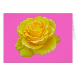 Beautiful Yellow Rose Closeup Isolated Card