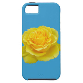 Beautiful Yellow Rose Closeup Isolated iPhone 5 Cases