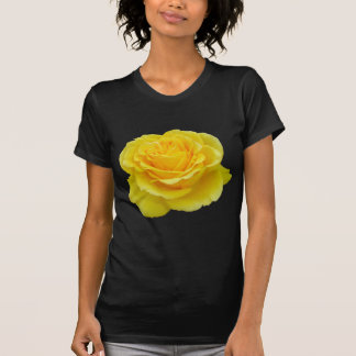 Beautiful Yellow Rose Closeup Isolated Tee Shirt