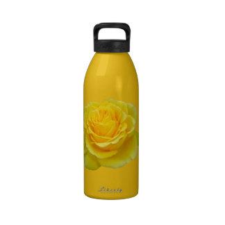 Beautiful Yellow Rose Closeup Isolated Drinking Bottle