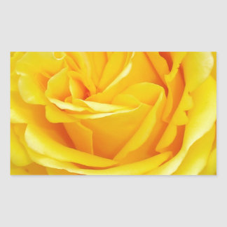Beautiful Yellow Rose Closeup Rectangular Sticker