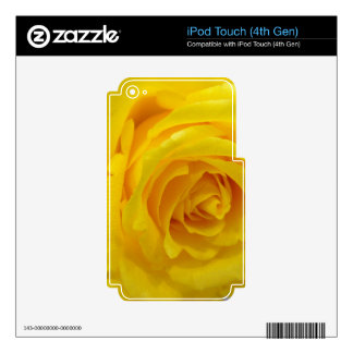 beautiful yellow rose flower photography skin for iPod touch 4G