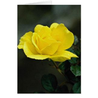 Beautiful yellow rose greeting card