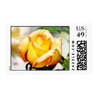 Beautiful Yellow Rose in the Garden Postage