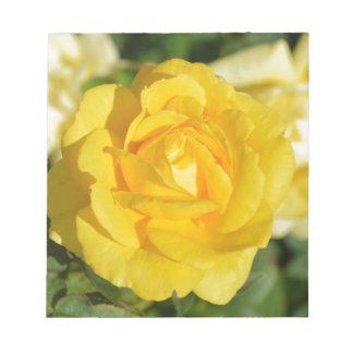 Beautiful yellow rose memo pad