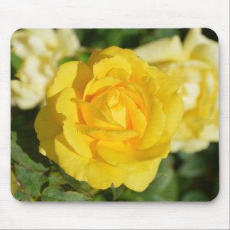 Beautiful yellow rose mouse pads