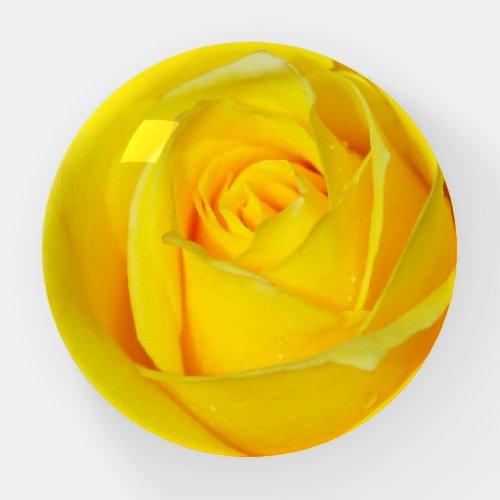 Beautiful yellow rose paperweight