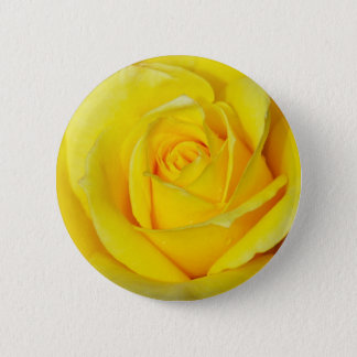 Beautiful yellow rose petals pinback button