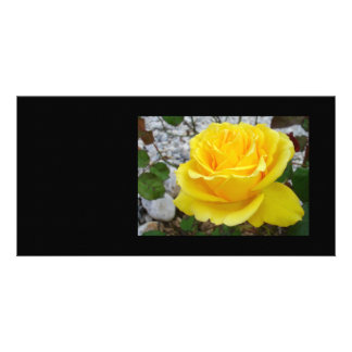 Beautiful Yellow Rose with Natural Garden Backgrou Photo Card