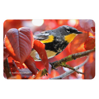 Beautiful Yellow-Rumped Warbler in the Tree Magnet