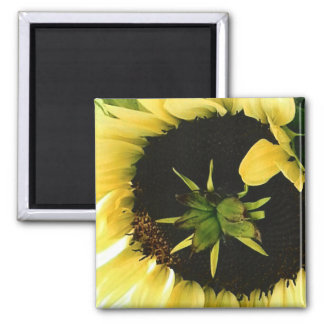 Beautiful Yellow Sunflower Magnet