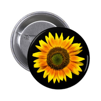 Beautiful yellow sunflower on black button