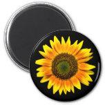 Beautiful yellow sunflower on black magnet