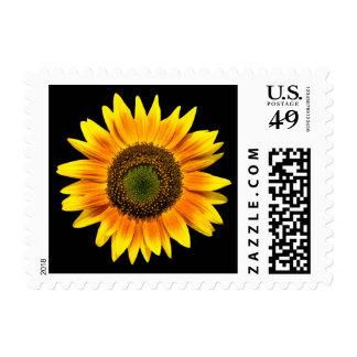 Beautiful yellow sunflower on black postage stamp
