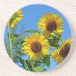 Beautiful yellow sunflowers drink coaster