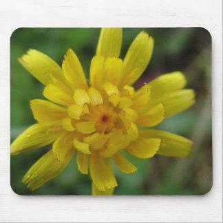Beautiful yellow wild flower, dandelion mouse pad