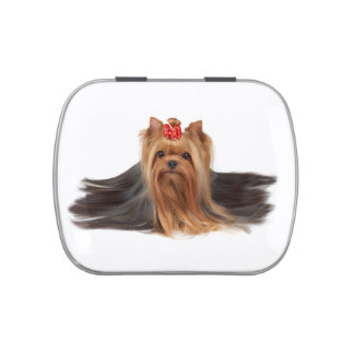 Beautiful yorkie jelly belly tins