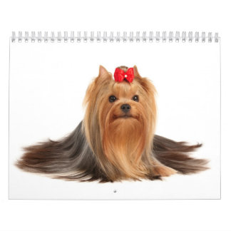 Beautiful Yorkshire Terriers Calendar