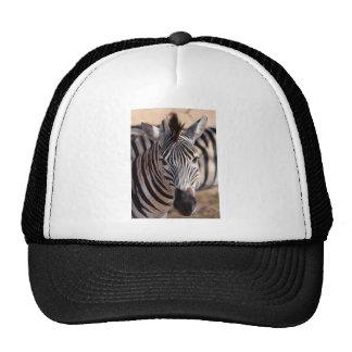 beautiful zebra trucker hat