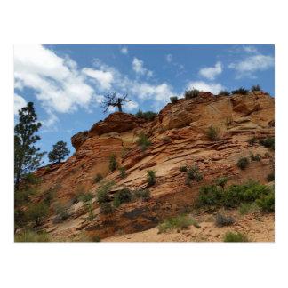 Beautiful Zion National Park Postcard