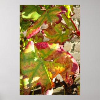 beautifull autumn vineleafes poster