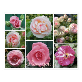 beautifull roses collage postcard