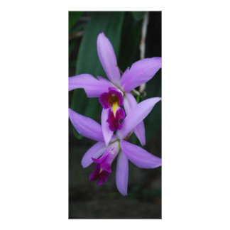Beautiul cattleya orchid rack card