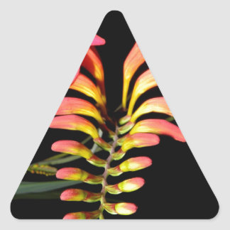 Beauty at night triangle stickers