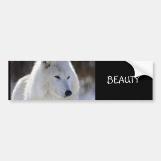 BEAUTY BUMPER STICKER