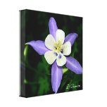 Beauty Flower Stretched Canvas Prints