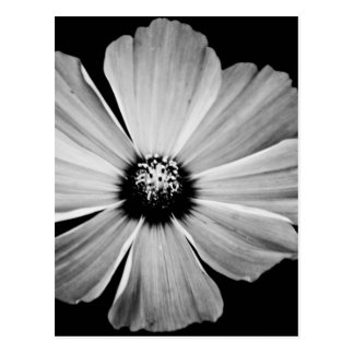 Beauty in Black and White Postcard